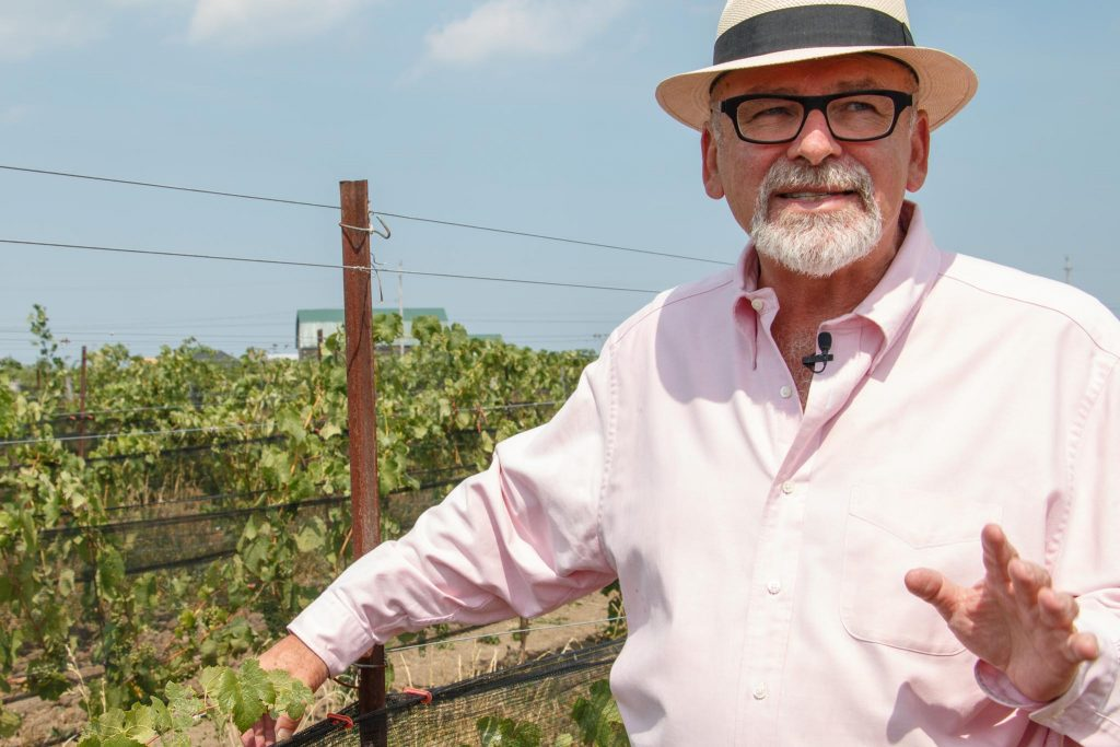 Southbrook_vineyard-wine-outdoors