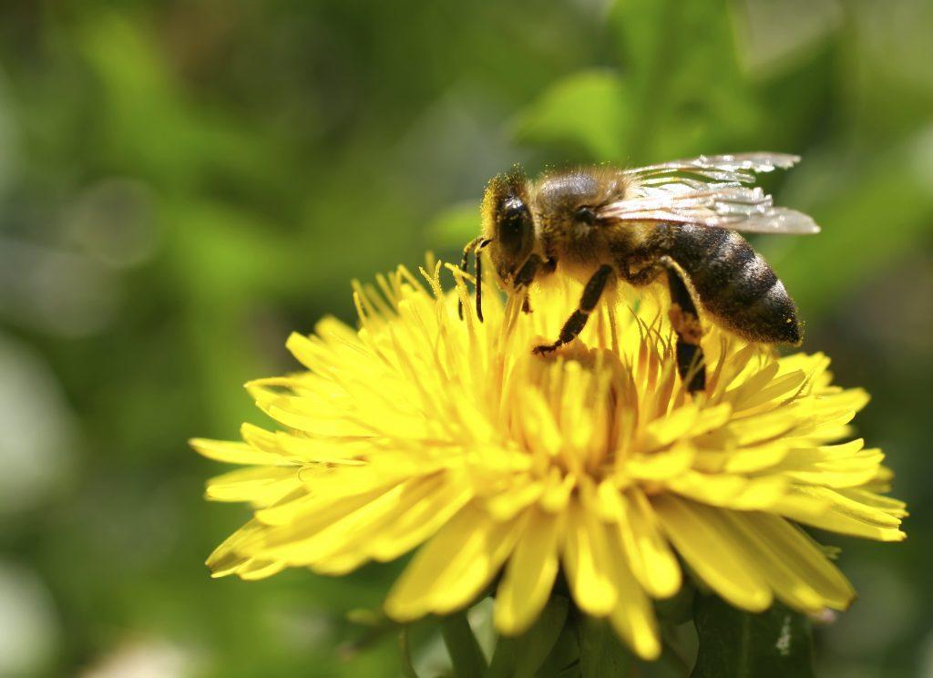 1 conditional pesticide
