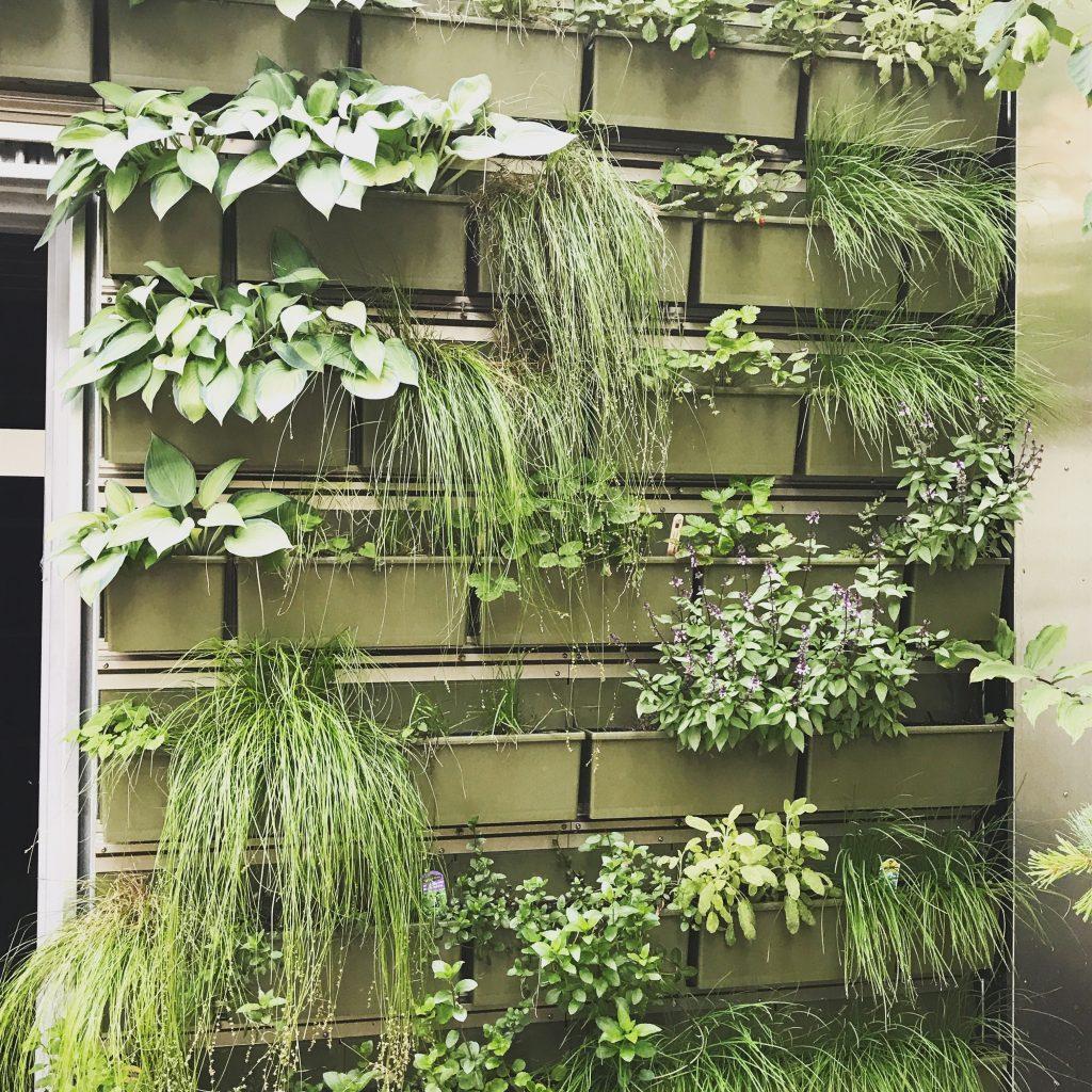 plants, envrionment