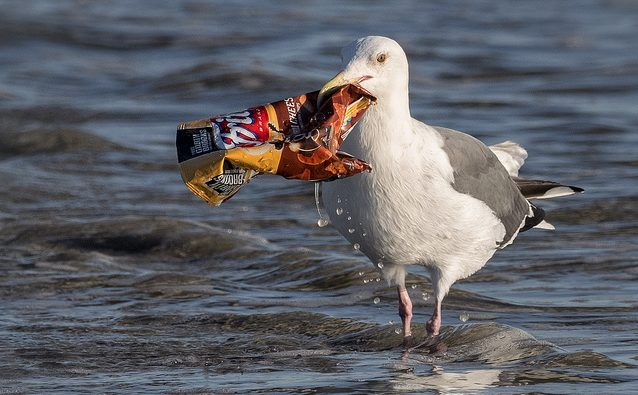 A seagull carries an empty chip bag in its beak