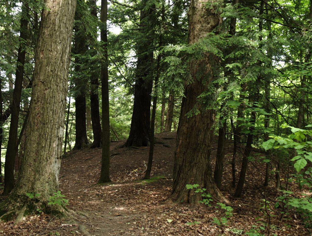 tree planting program axed