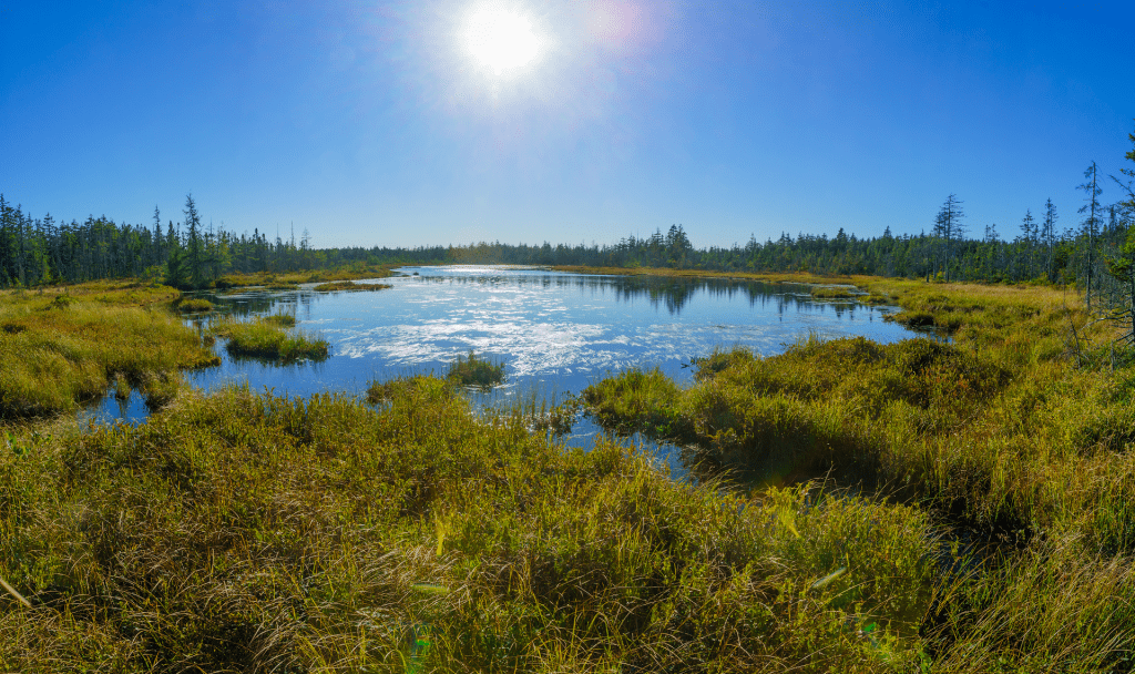 A bog in the Bay of Fundy region. All together Canada, peatlands across Canada store twice the amount of carbon as the boreal forest.