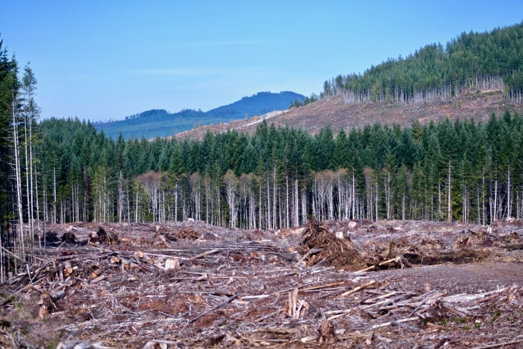 Logging in British Columbia. Industrial activities that cut down trees release carbon and contribute to climate change.