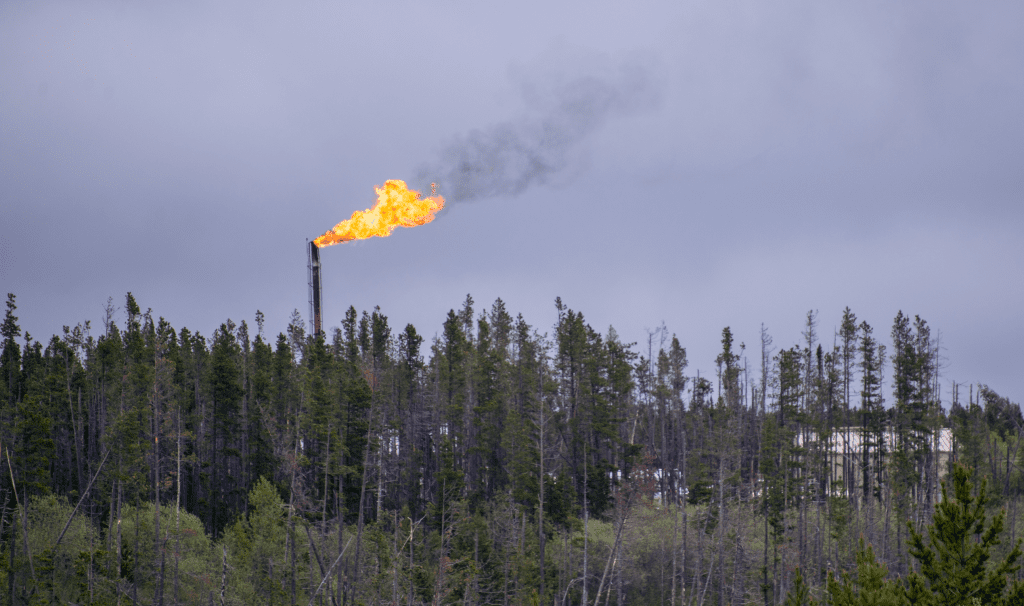 A methane flare rises above a tree canopy. The oil and gas industry is fastest growing source of carbon emissions in Canada.
